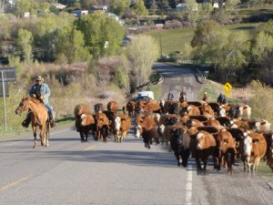 Sunday morning traffic jam, Crawford Colorado
